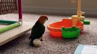 How beautiful this bird works like children