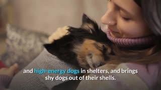 Your Dog Need you Help.