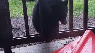 New Jersey Bear Family