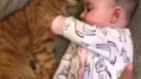 Did you see the cat sleeping next to the child?