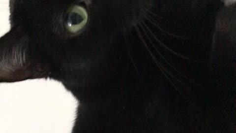 Close cat face shot of a cat