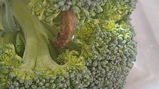 Brocco Pillar