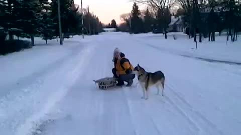 Husky dog and cat basket snow ride