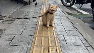 a cat on a street