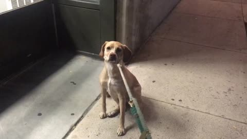 Pet Store Is Closed, Dog Is Upset And Refuses To Leave
