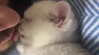 Cat kitten video
