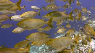 Dive with beautiful fishes