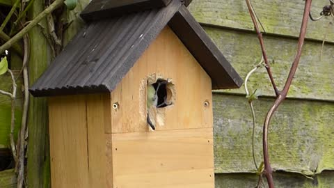 A nice bird pecking a hole