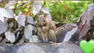 Squirrel life