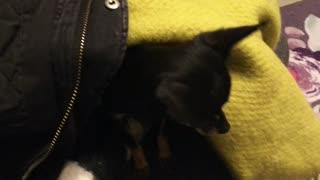 Awakening Dog From Its Dwelling