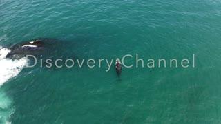A Whale aerial view