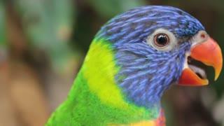 Cute parrot parrot