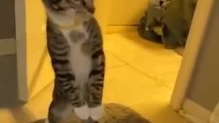 curious cat in the bathroom