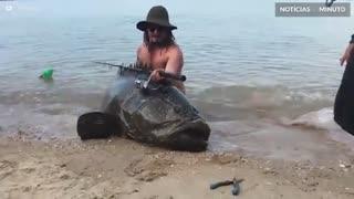 Pescadores capturam garoupa-gigante na Austrália