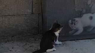 Cats who are brothers are playing