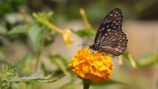 Relaxing Butterfly Video