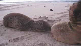 Cute Sea Creatures: Baby Sea Lion