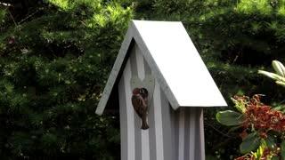 A bird that feeds its chicks