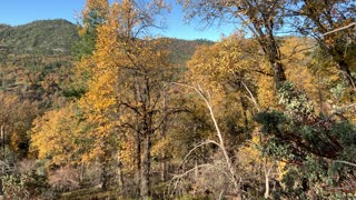 Fall in the NorthFork forest California