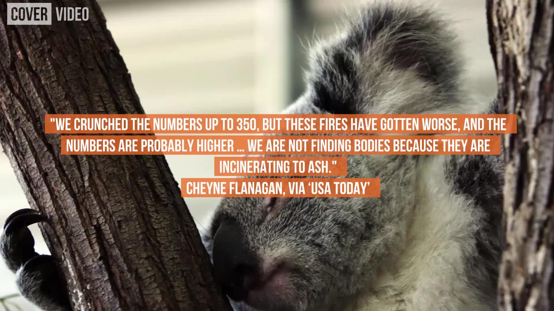 Koala Colonies Decimated by Wildfires in Australia