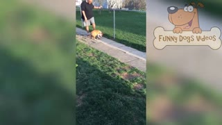 TOP FUNNY DOGS FAILS compilation