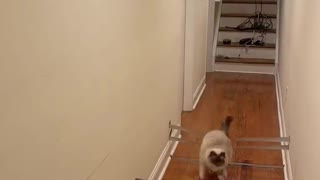 Cat Crushes Quarantine Workout Routine