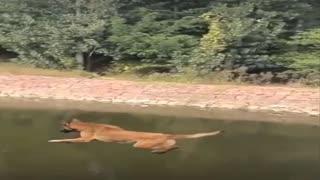 The dog wants to swim