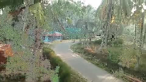 Elephant Now Attack In Palakkad Kerala