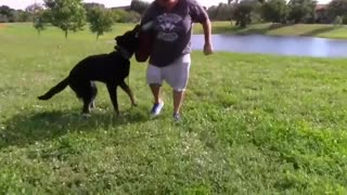 Make your dog Aggressive with these simple tips