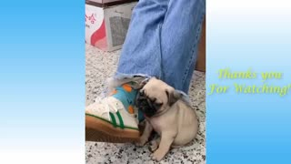 Cute Pets And Funny Animals being natural