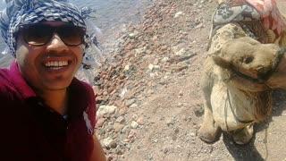 Tourist Fun Smile With Camel Dahab Egypt