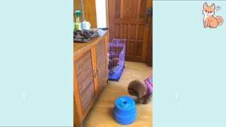 Hilarious Dog Videos to watch now