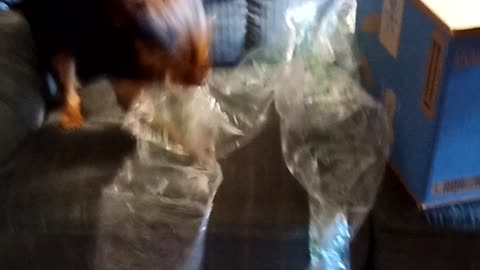 Buster and bubble wrap3