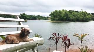 Dog enjoying the view of the lake
