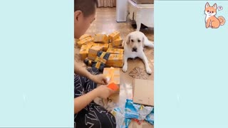 Perros lindos / dogs cute