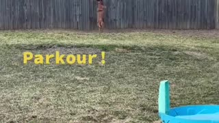 Parkour Dog trying catch squirrel