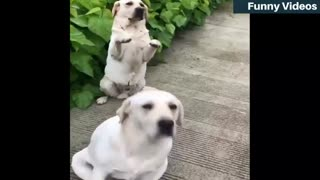Animals must watch funny videos