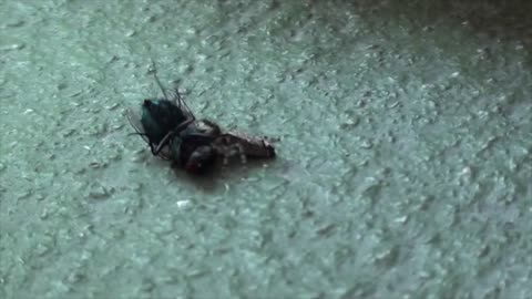 ✅ Spider vs. Fly...wait for it!