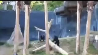 Monkey man wit a whip
