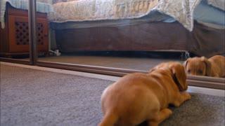 Skillful Dog Fight to Mirror Dog