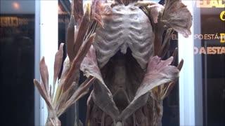 Cuerpos Humanos Reales Exhibition in Santiago, Chile