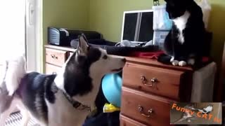 CATS AND DOGS MEETING FOR THE FIRST TIME (INTENSE!)