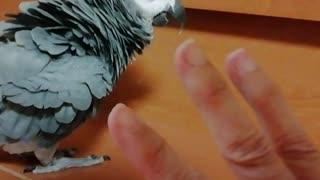 1 2 3 🐦5! Smart parrot knows four,says four !