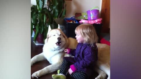 Funny dog video   Learn the basics of dog training