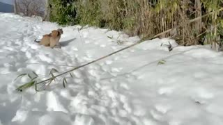 two happy puppies play in snow with cute cat