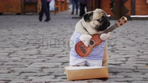 a guitarist dog