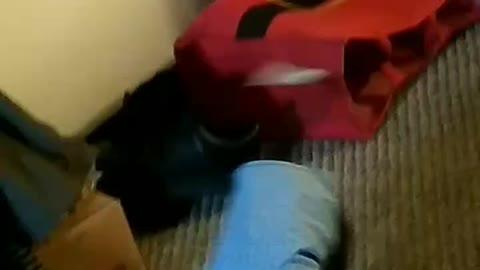 Carpet Affair