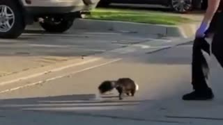 Ontario police officer rescues skunk from McFlurry cup Watch it