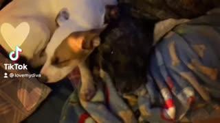 Puppy love snuggles