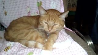 My cat my cat is asleep